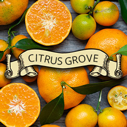 Rogue Patriot Citrus Grove Beard Products